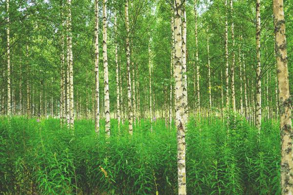 Suomi tarvitsee aikuisia ilmastopolitiikkaan